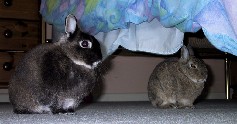 Flower and Thumper