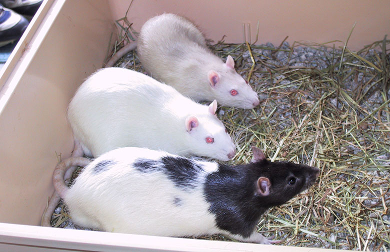 Mole, Mouse and Ferret