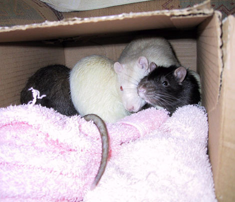 Otter, Mouse, Ferret and Mole all squished up