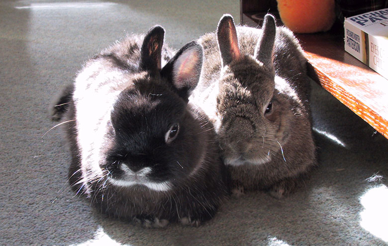Our house bunnies, Flower and Thumper enjoying the sunshine