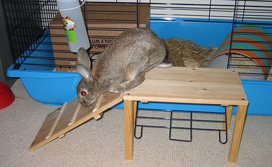 Fern demonstrating her new cage ramp