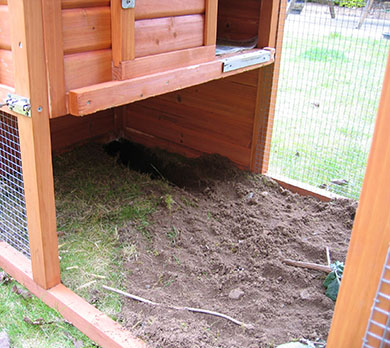 The tunnel our bunny, Fern dug in her run