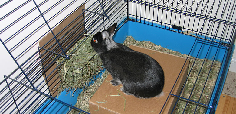 Our cheeky bunny, Fawn sitting on a cardboard box munching his hay