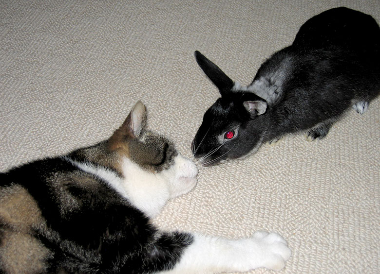 Our cat Custard and bunny Fawn touching noses