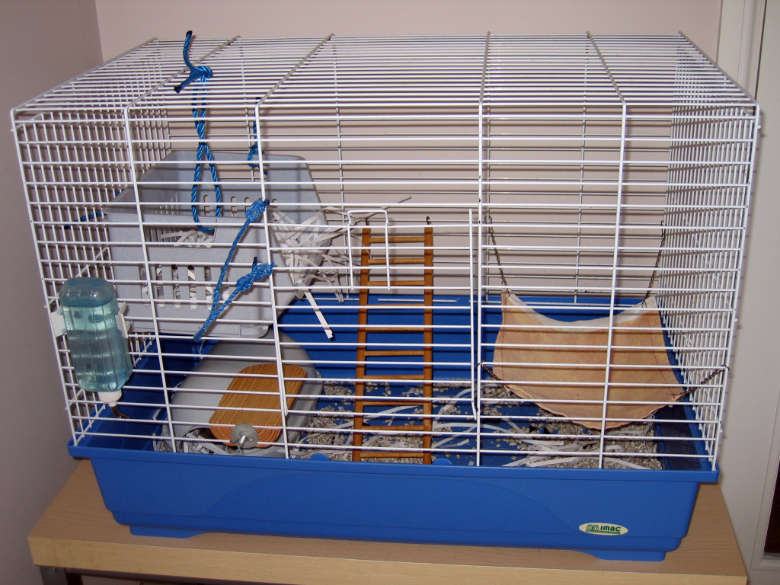 Our current rat cage
