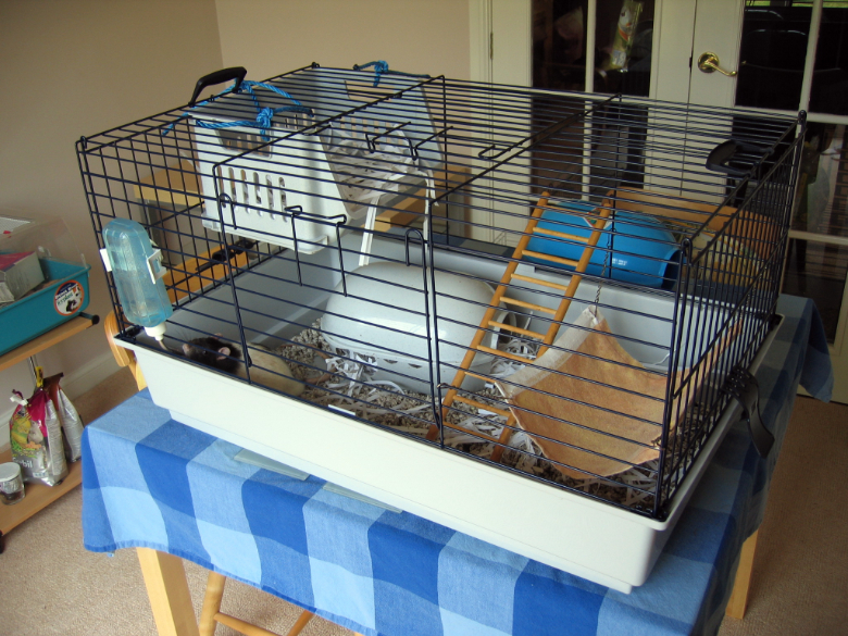 Pickle's new lower rat cage