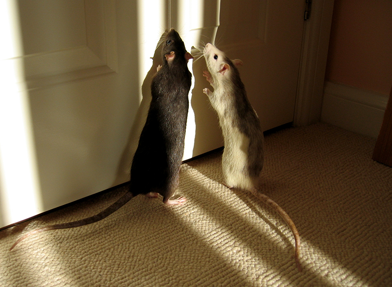 Kiwi and Pearl looking for the exit