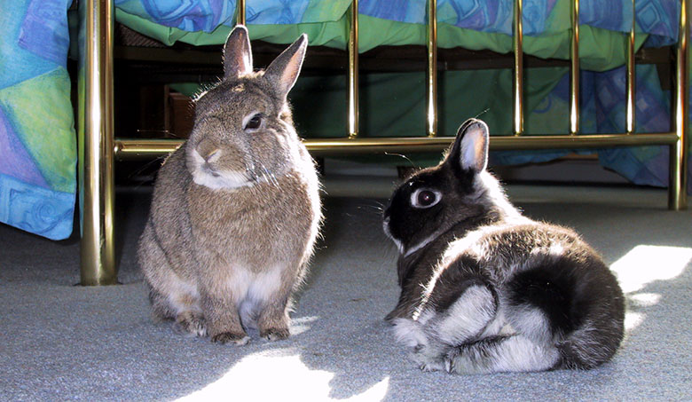 Thumper and flower relaxing in the sunshine
