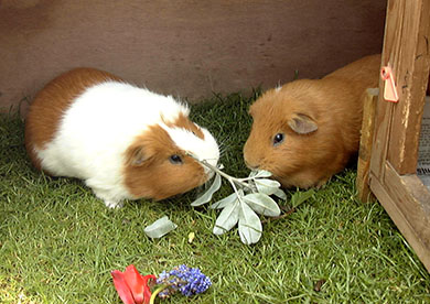 Clipper and Coco munching