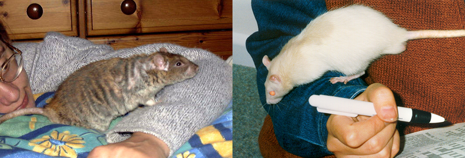 Our two rats, Crumble and Silky with Lindsay