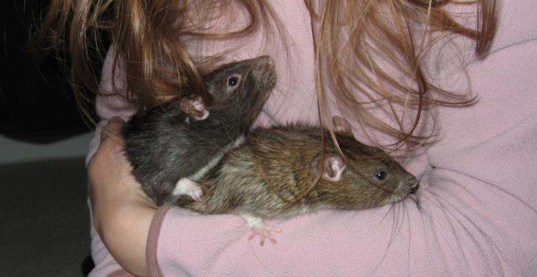 Holding my two rats, Pepper and Pippin, in my arms