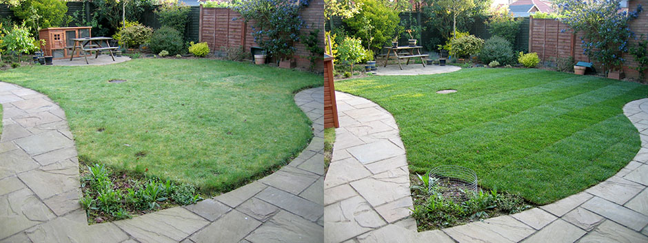 Fern's old lawn on the left and her nice healthy new lawn on the right
