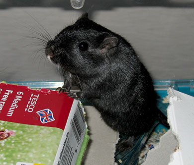 Our funny little gerbil, Berry