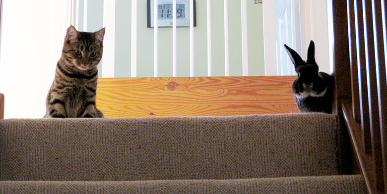 Our cat, Cubbie and bunny, Fawn looking down the stairs