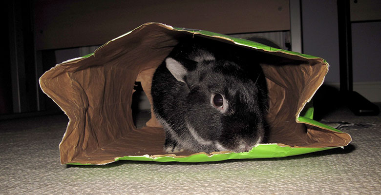 Our sweet bunny, Fawn exploring a large paper bag
