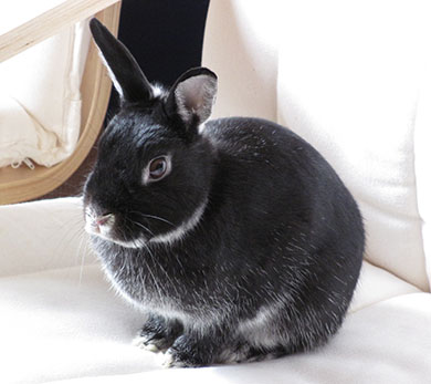 Out sweet bunny, Fawn sitting in an armchair