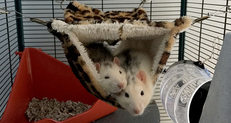 The real Bandit & Wombat enjoying their cosy bed