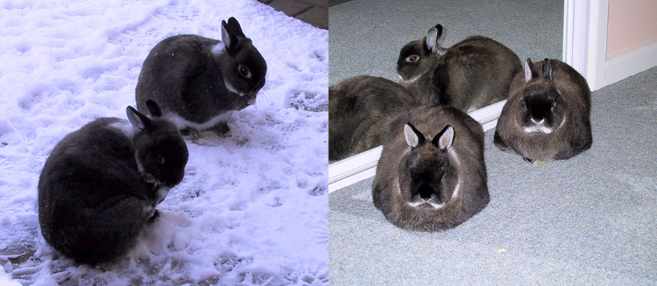 Our bunnies not impressed with the cold, and then safe and warm inside