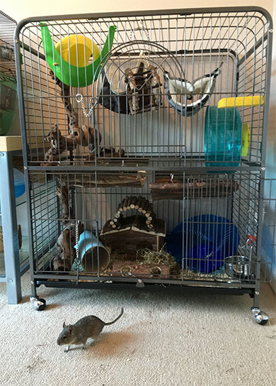 Max's new home