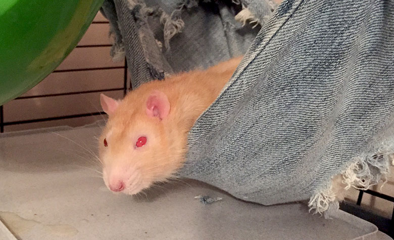 Maize in his favourite trouser leg bed