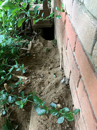 The tunnel our bunny, Fern has excavated