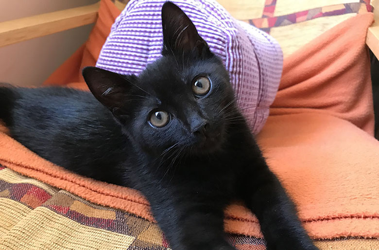 Our black kitten Jessie