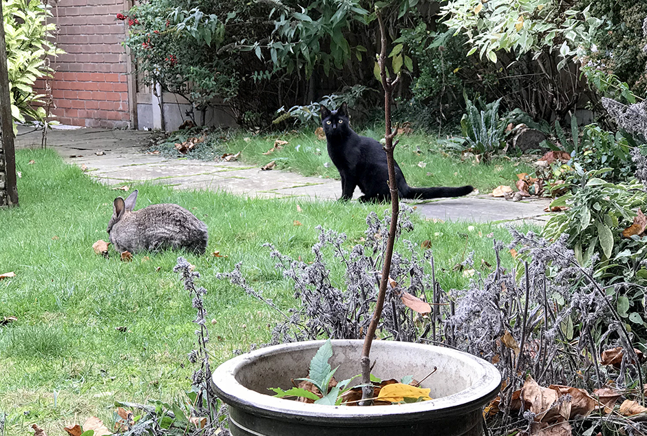 Our bunny Fern and new kitten Jessie in the garden
